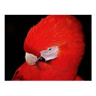 What now little parrot postcard