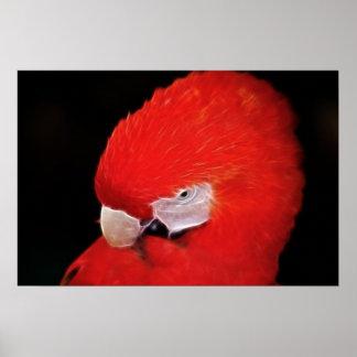 What now little parrot print