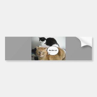 What Other Cat?/Orange Tabby Humor Bumper Sticker