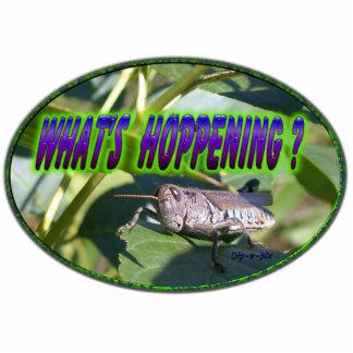 What s Hoppening Grasshopper Photo Sculpture