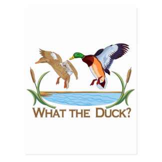 What The Duck? Postcard