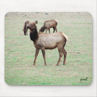 What the elk you lookin at? mouse pad