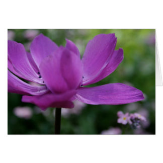 What you hide? - Anemone - Floral Photography Card