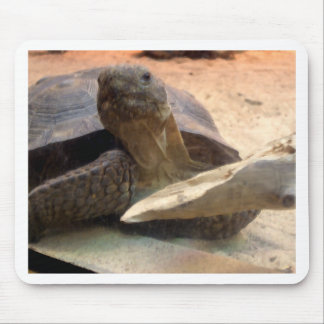 Whatcha doin Friendly Tortoise Designer Stuff Mouse Pad