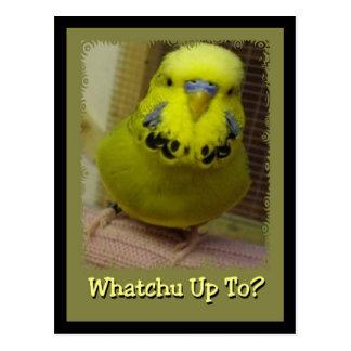 Whatchu Up To? Postcard