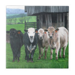 """""""What're You Looking At?"""" by Christopher Lyter Ceramic Tiles"""