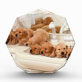 What's A Bath? Cute Puppies Discover BathTime Acrylic Award