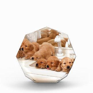What's A Bath? Cute Puppies Discover BathTime Award