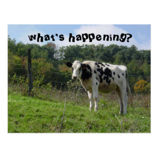 what's happening? postcard