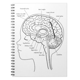 What's in Your Brain Spiral Note Book