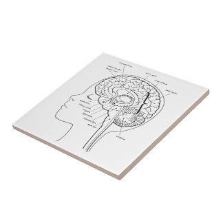 What's in Your Brain Ceramic Tile