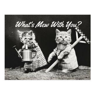 What's Mew Kittens Postcard