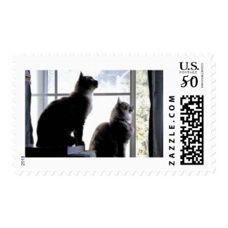Whats Out There? Curious Cats Kitties Photography Postage