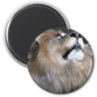 What's Up? 2 Inch Round Magnet