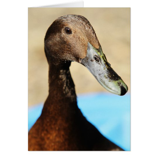 WHAT'S UP DUCK CARD
