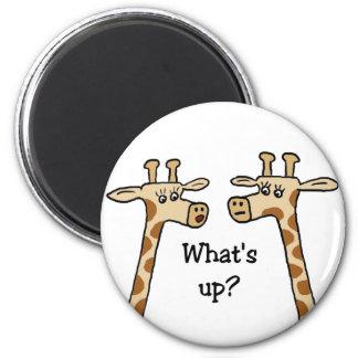 What's up? Giraffe magnet