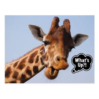 What's Up Giraffe Postcard
