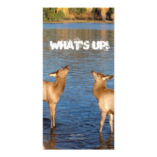 , WHAT'S UP! PHOTO CARD