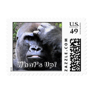 What's Up!_Postage Postage Stamps