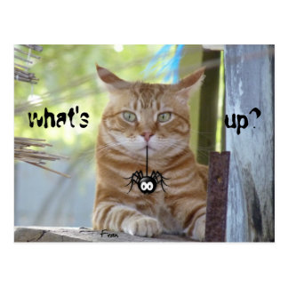 what's up? postcard