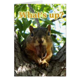 What's Up Squirrel With Nut Anytime Card