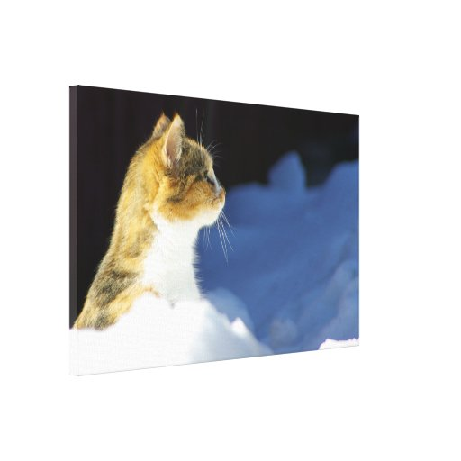Whats Up? Stretched Canvas Print