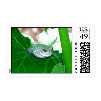 What's Up, Tree Frog Stamps