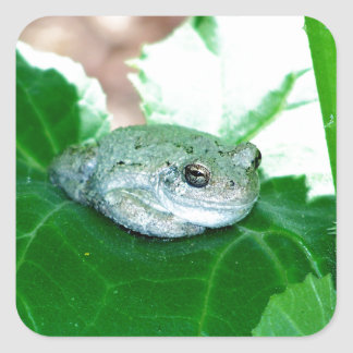 What's Up, Tree Frog Square Sticker