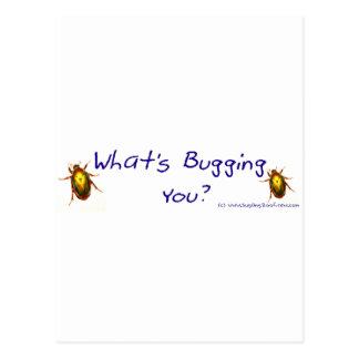 WhatsBuggingYou? Postcard