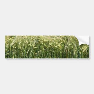 Wheat - beautiful! car bumper sticker