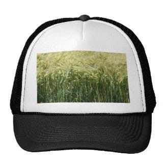 Wheat - beautiful! hats