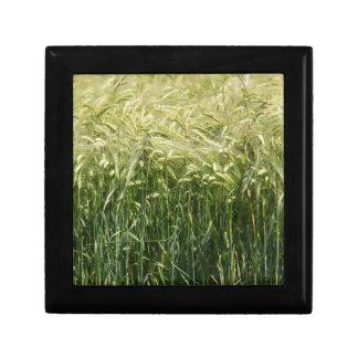 Wheat - beautiful! keepsake box