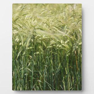 Wheat - beautiful! photo plaque