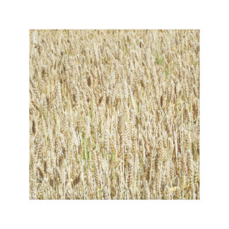 Wheat Canvas Art