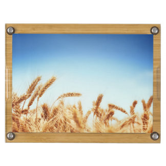 Wheat field against blue sky