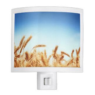 Wheat field against blue sky nite lights
