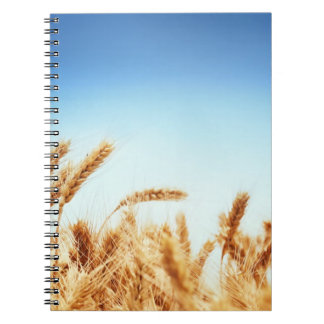 Wheat field against blue sky notebooks