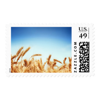 Wheat field against blue sky postage stamp