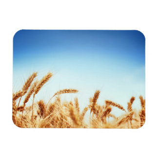 Wheat field against blue sky rectangle magnet