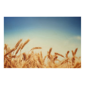 Wheat field against blue sky wood canvases