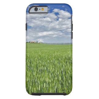 Wheat field and drive lined by stately cypress tough iPhone 6 case