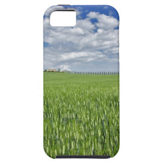 Wheat field and drive lined by stately cypress iPhone 5 cases