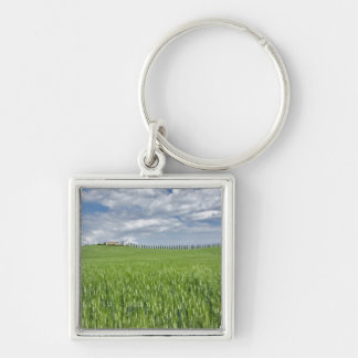 Wheat field and drive lined by stately cypress keychain