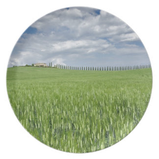 Wheat field and drive lined by stately cypress plate
