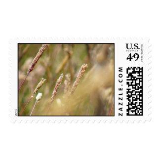 Wheat Field Blur Postage