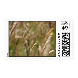 Wheat Field Blur Postage Stamp