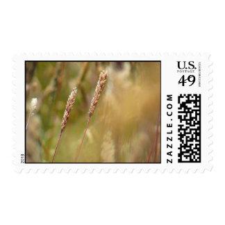 Wheat Field Blur Stamp