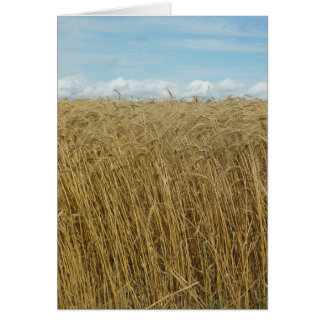 Wheat Field Greeting Cards