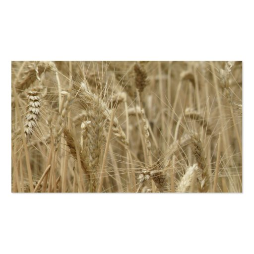 Wheat Field Double-Sided Standard Business Cards (Pack Of 100)