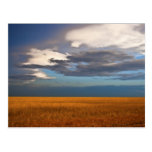 Wheat Field Fine Oil Painting Post Card